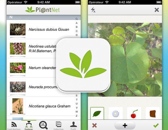 اپلیکیشن Plantnet برای شناسایی گیاهان سمی