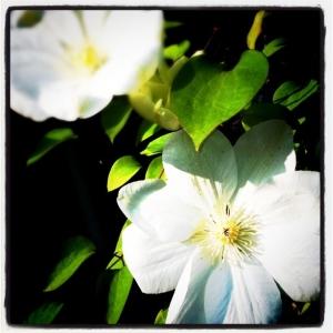 5 اپلیکیشن رایگان باغبانی برای دوست داران طبیعت (مخصوص iOS)