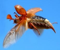 تعداد حشرات