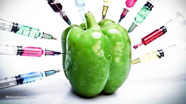 آینده ی مواد غذایی اصلاح شده یژنتیکی (GMO)  چگونه خواهد بود؟