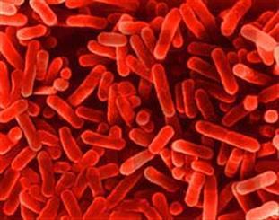 باکتری ها برای یکدیگر مواد غذایی ارسال و دریافت می کنند.