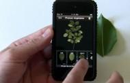 تشخیص انواع گیاهان و درختان با اپلیکیشن متفاوت Leafsnap