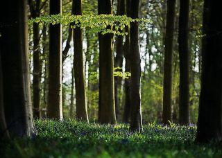 عکاسی از منظره