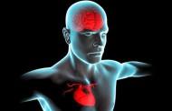 پژوهشگران برای قلب انسان ها یک مغز شناسایی کردند