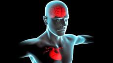شناسایی مغز برای قلب انسان ها