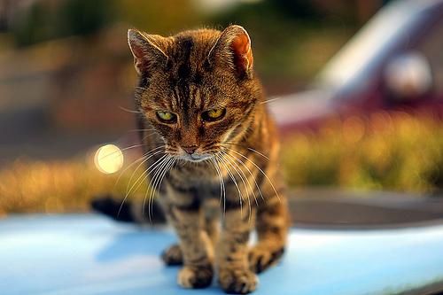 Serious_Cat_647