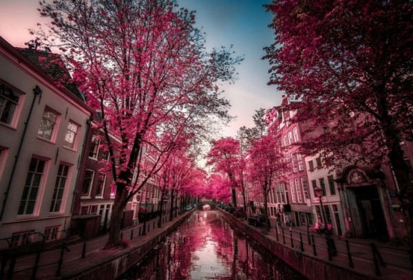 Top-10-Blossoming-Amsterdam-Photo-by-Invivo-Oz-740x502