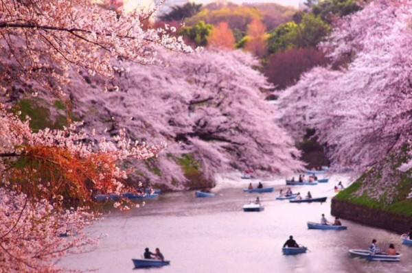 Top-10-Blossoming-Chidorigafuchi-Photo-by-Shane-Hayes-740x491