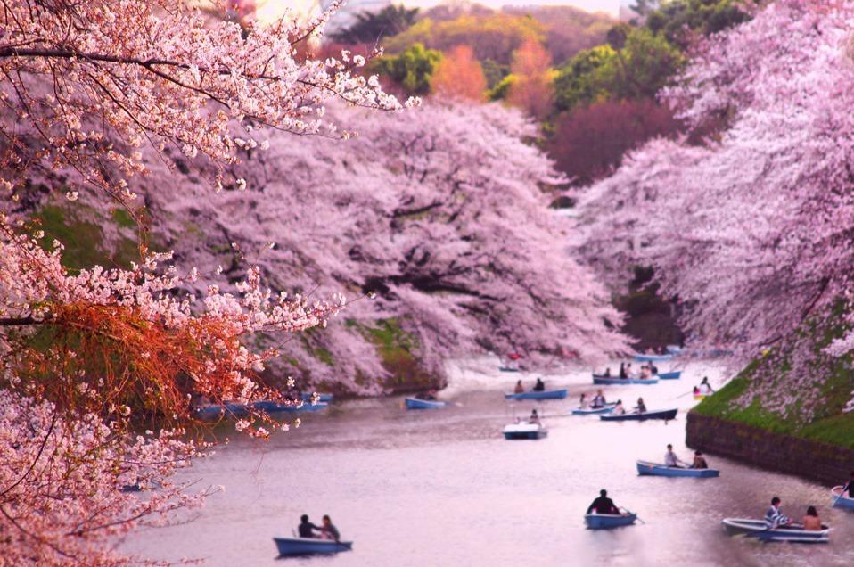 ۱۰ شهر پر شکوفه در بهار که ارزش دیدن را دارند