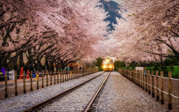 Top-10-Blossoming-Korea-Photo-by-Aaron-Choi-740x462