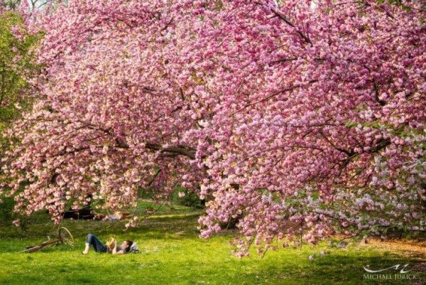 Top-10-Blossoming-NYC-Photo-by-Michael-Jurick-740x494
