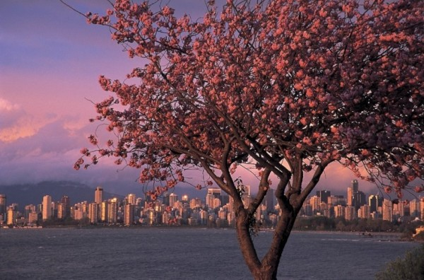 Top-10-Blossoming-Vancouver-740x489