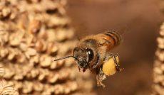 مسیریابی مغناطیسی زنبور