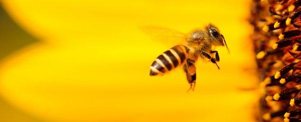 مغز زنبور در ساخت بهترین دوربین جهان