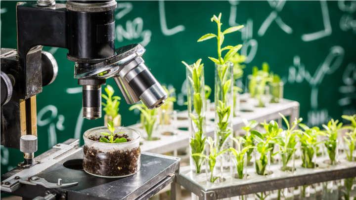 گیاهان جاسوس