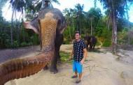 گرفتن عکس سلفی توسط یک فیل!