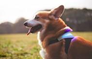 قلاده هوشمند حالات مختلف سگ را به شما نشان می دهد