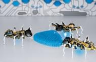 ربات های حشره ای که حرکاتشان بیش از حد طبیعی است