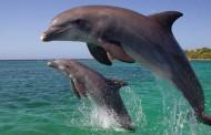 کمک شگفت انگیز دلفین به انسان در یادگیری جهت یابی پژواکی