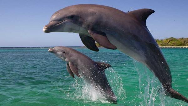 جهت یابی پژواکی دلفین ها