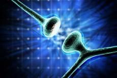 سیناپس های مغزی