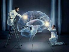 پیوند مغز پرورش یافته ی انسان به موش