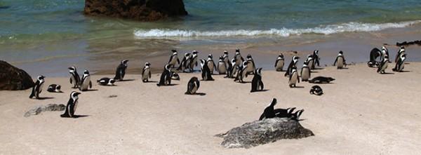 penguins-talking