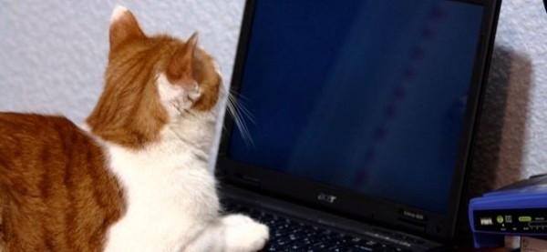 اشتراک گذاری امن گوشی، تبلت و لپ تاپ