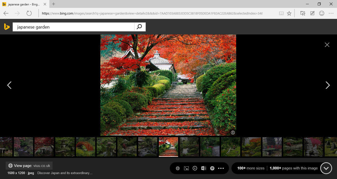 بخش جستجوی تصاویر Bing آپدیت شد