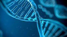 تاثیر عجیب افکار بر ژن ها