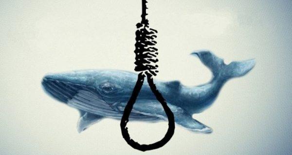 سازندگان چالش نهنگ آبی دستگیر شدند