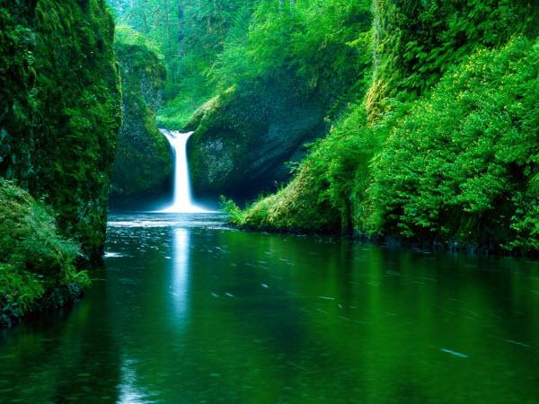 عکس پس زمینه آبشار و درخت و دره و گیاه