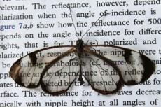 بال پروانه، رمز دستیابی به تلفن با صفحه ضدِ بازتاب