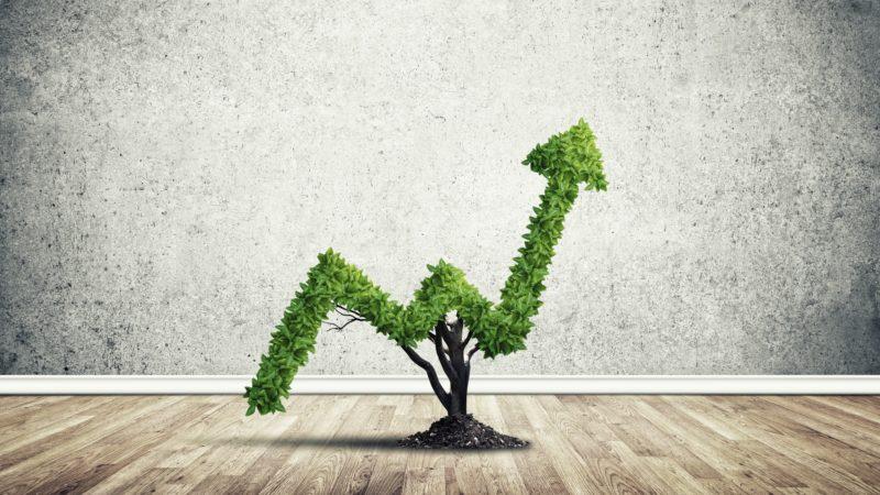 راه اندازی کسب و کار: رشد